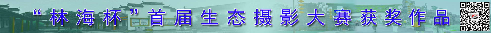 """""""林海杯""""首届生态摄影大赛获奖作品"""